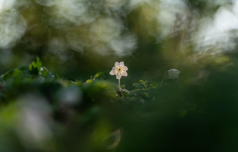 Фото обои цветок, цветы, весна, боке