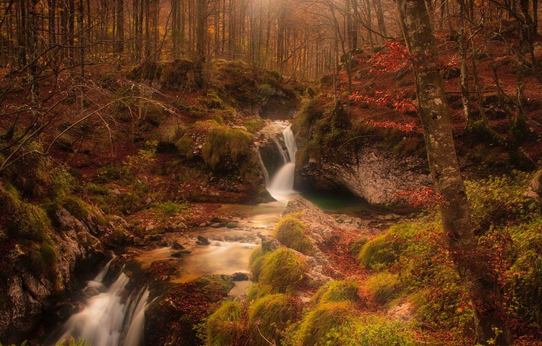 Фото обои осень, лес, деревья, ручей, камни, мох