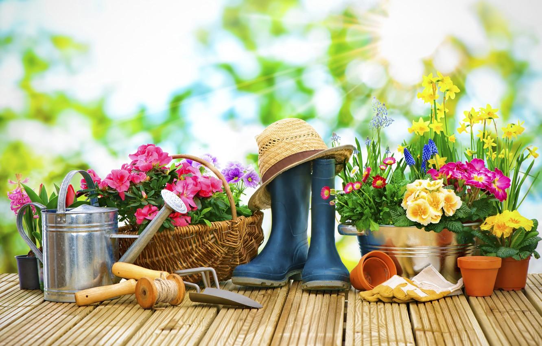 Фото обои солнце, лучи, цветы, фон, корзина, шляпа, сапоги, сад, перчатки, лейка, горшки, верёвка, нарциссы, боке, маргаритки, …