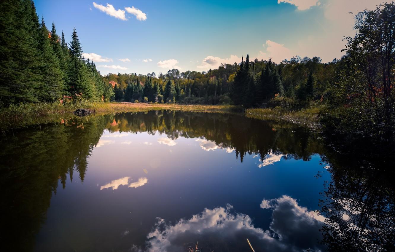 Фото обои облака, ели, простор, just, отражение в воде, clouds, blue sky, голубое небо, лесное озеро, красота …