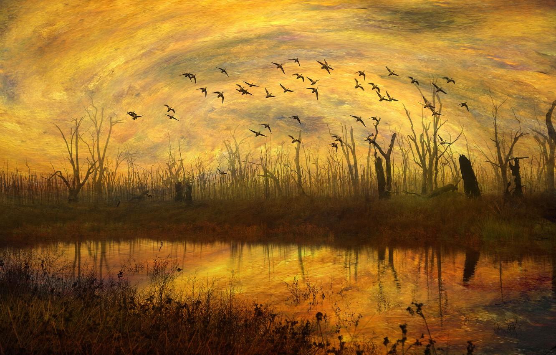 Фото обои осень, небо, трава, вода, облака, свет, деревья, полет, пейзаж, закат, птицы, оранжевый, ветки, желтый, природа, …