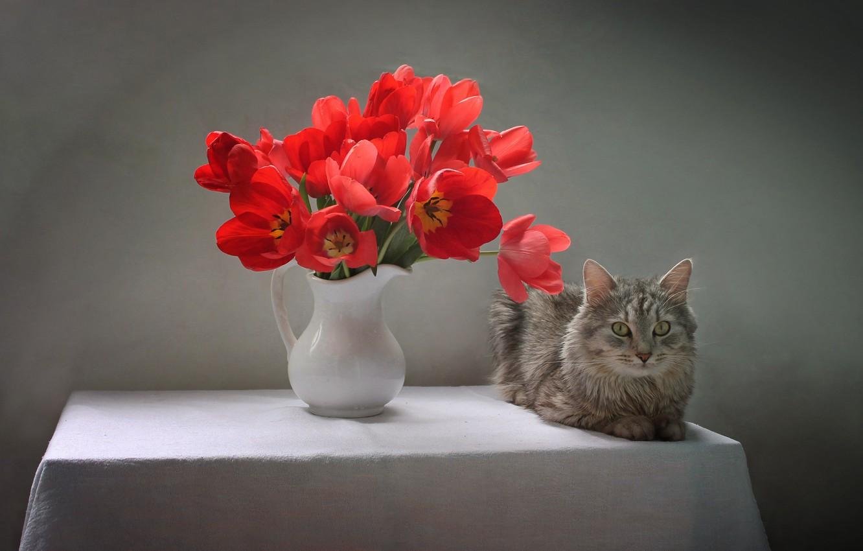 Фото обои кошка, кот, цветы, стол, животное, тюльпаны, кувшин, скатерть, Ковалёва Светлана, Светлана Ковалёва