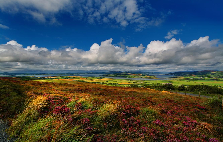 Обои вереск, холмы, цветы. Пейзажи foto 10
