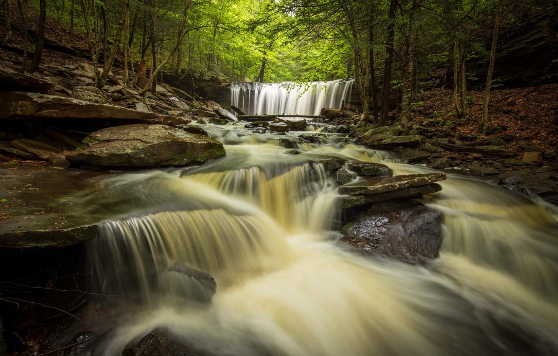 Фото обои лес, река, водопады, Пенсильвания, каскад, Pennsylvania, Ricketts Glen State Park, Парк штата Рикетс Глен, Oneida …