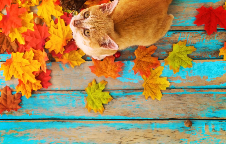 Фото обои осень, кошка, листья, фон, дерево, colorful, vintage, wood, cat, background, autumn, leaves, maple
