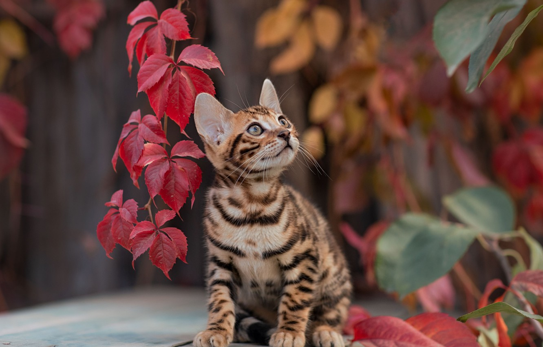 Фото обои листья, котёнок, Юрий Коротун