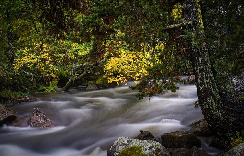 Фото обои осень, лес, пейзаж, природа, река, камни