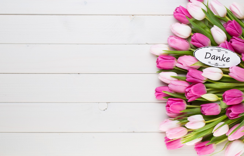 Фото обои белый, цветы, фон, тюльпаны