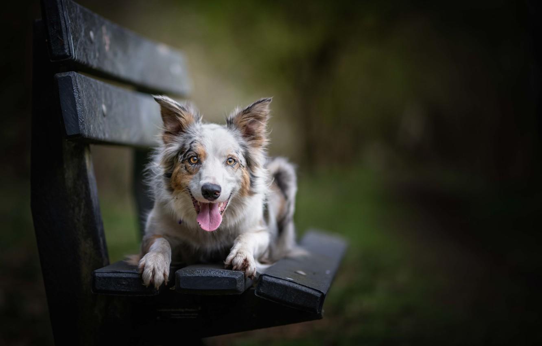 Фото обои друг, собака, скамья