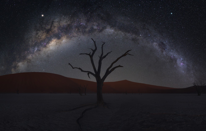 Фото обои песок, дерево, пустыня, дюны, desert, Намибия, tree, sand, Namibia, dunes, Zhu Xiao