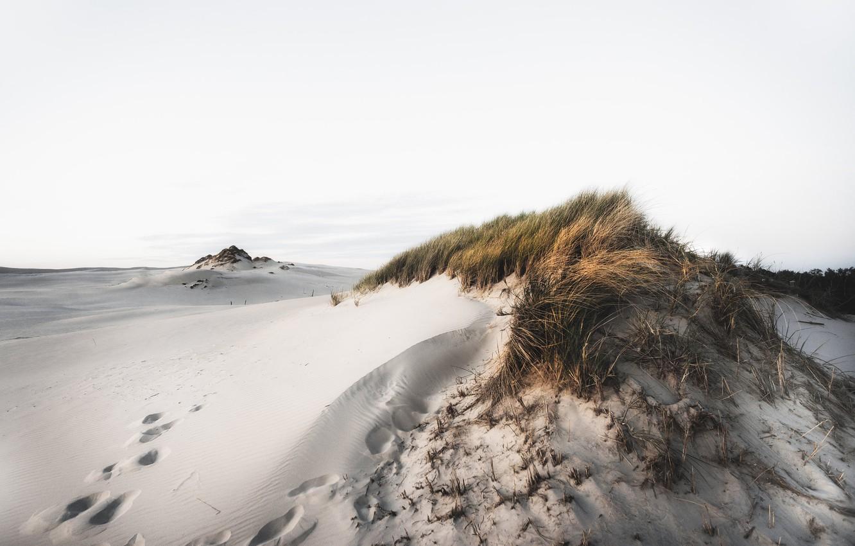 Фото обои природа, берег, дюны