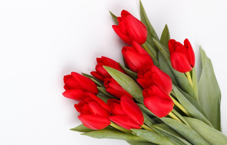 Фото обои цветы, букет, тюльпаны, красные, red, fresh, flowers, tulips, spring