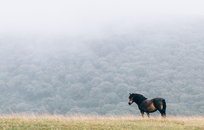Фото обои field, fog, horse, mane