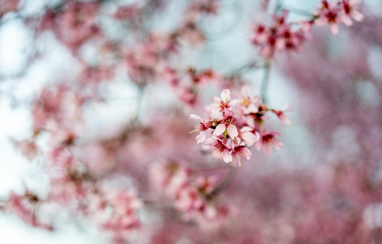 Обои размытый фон, цветок. Цветы foto 7