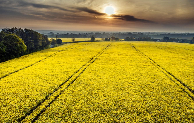 Фото обои поле, лето, закат, туман, рапс