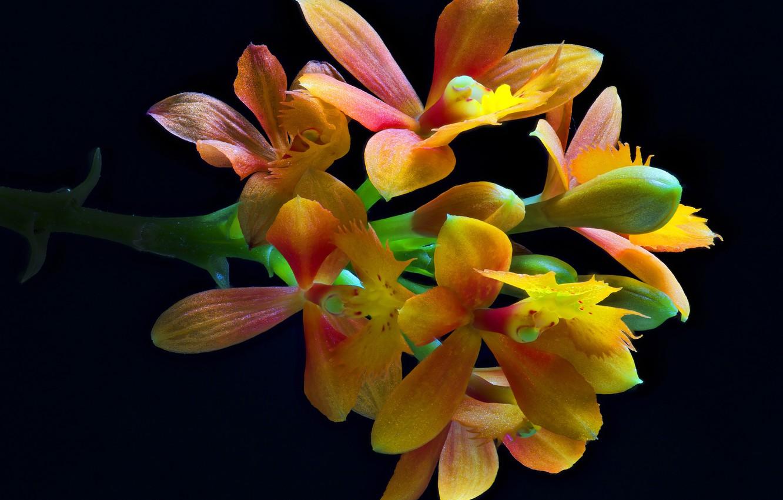 Фото обои macro, petals, bunch of flowers, exotic flowers, bloomming