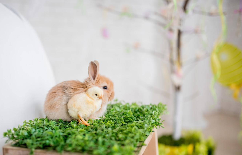 Фото обои кролик, травка, цыпленок