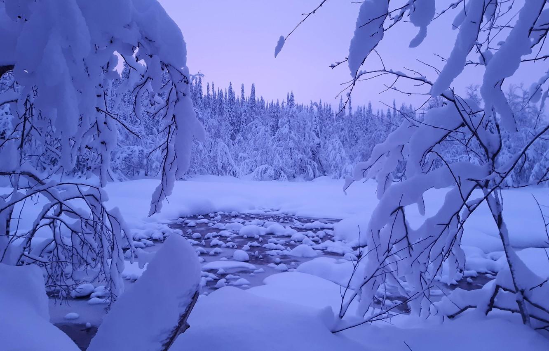 Фото обои зима, лес, снег, деревья, пейзаж, ветки, природа, Финляндия, Лапландия