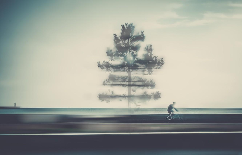 Фото обои дорога, дерево, велосипедист