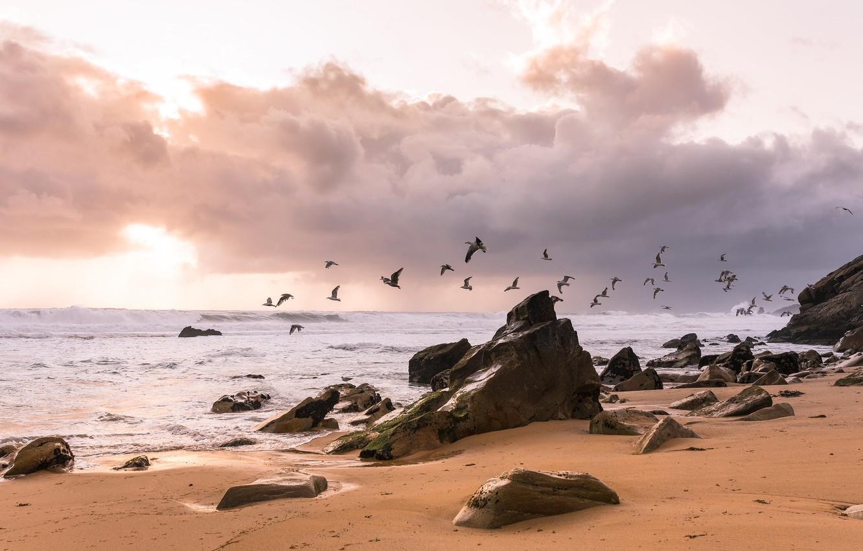 Фото обои море, птицы, берег