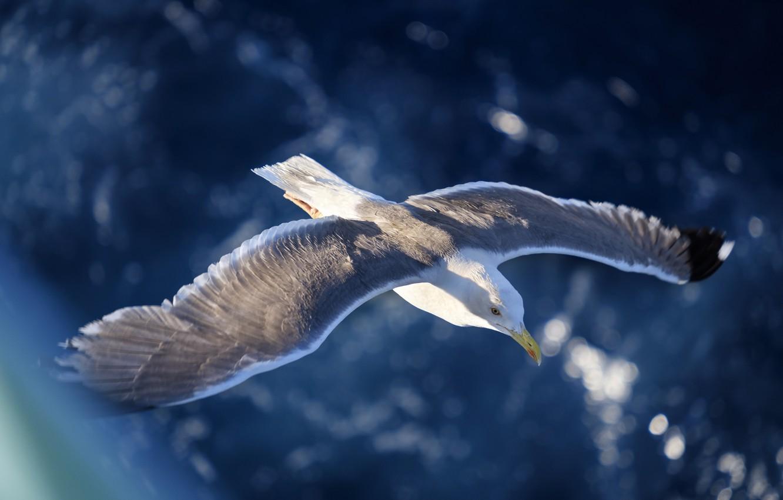 борьбы болезнь фото морская чайка в полете высокого качества движения
