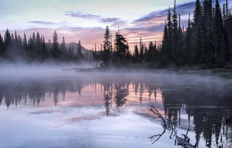 Фото обои деревья, пейзаж, природа, туман, озеро, утро, США, Olympic, национальный парк, National Park, Олимпик