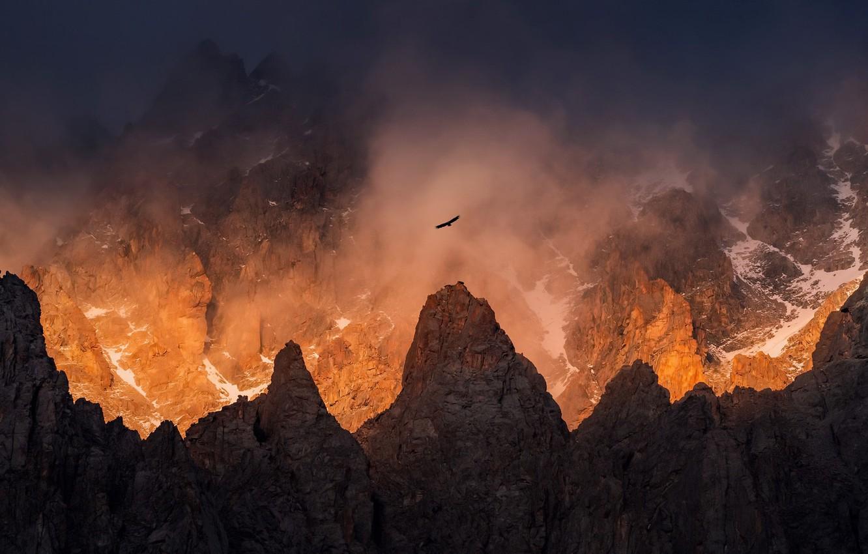Фото обои свет, горы, туман, птица