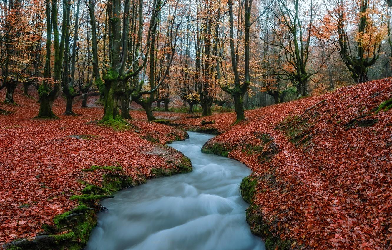 Фото обои осень, вода, деревья, природа, листва, поток, Испания