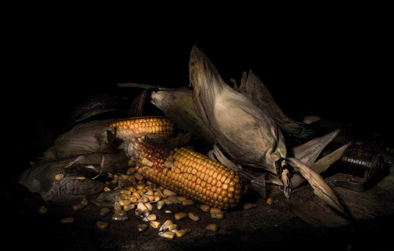 Фото обои кукуруза, зёрна, початок