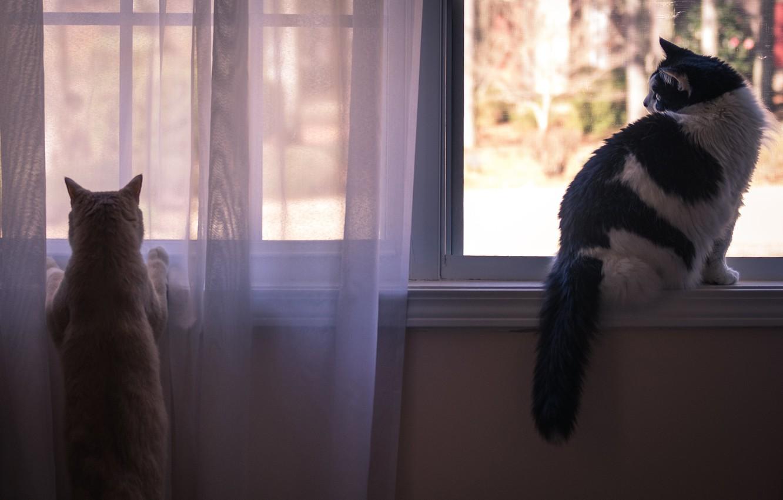 Обои Кошка. Кошки foto 12