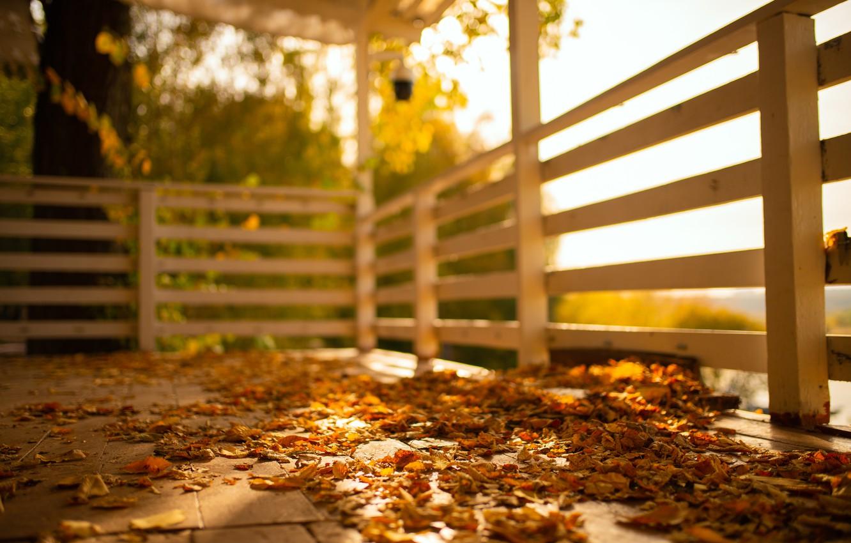 Фото обои осень, солнце, листва, погода, терасса