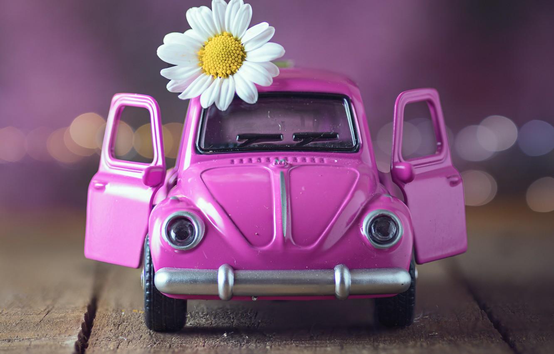 Фото обои цветок, игрушка, доски, ромашка, машинка, боке
