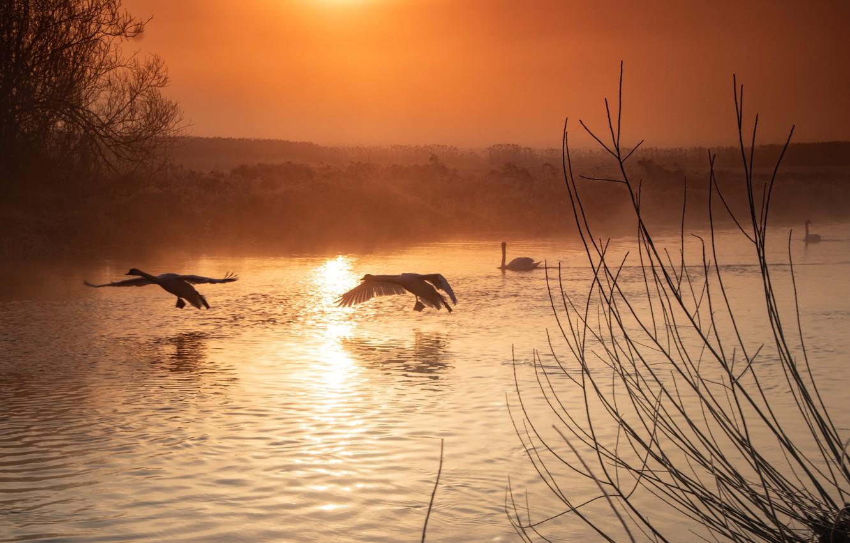 Фото обои птицы, ночь, река