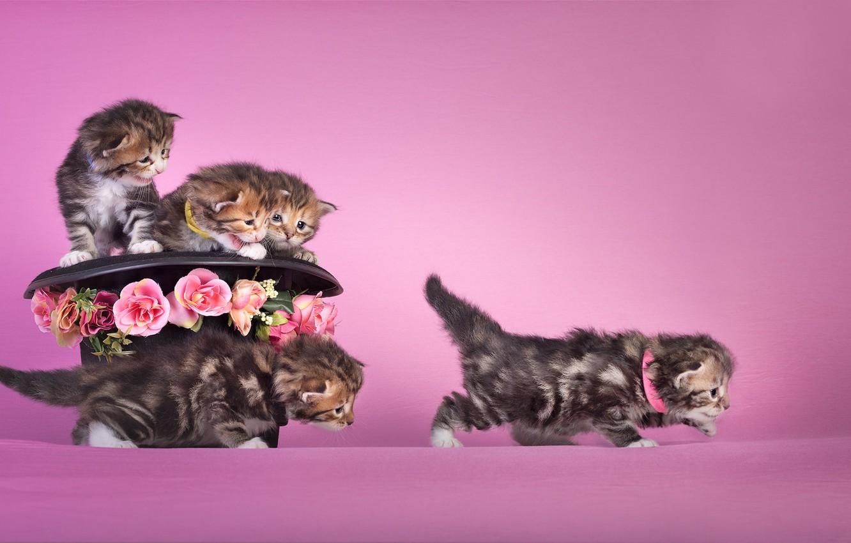 Фото обои цветы, настроение, шляпа, котята, малыши, розовый фон
