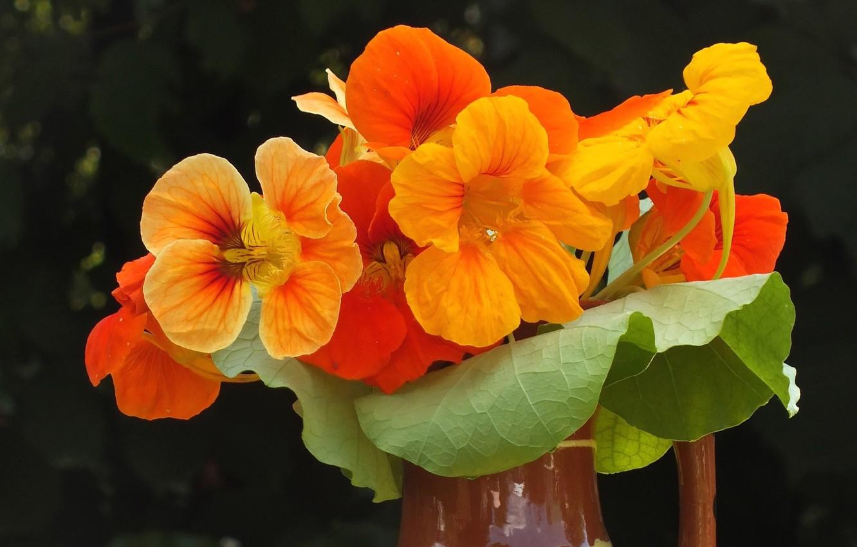 Фото обои фон, букет, оранжевые цветы, настурция