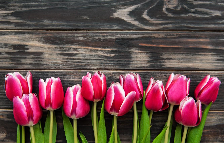 Фото обои фон, тюльпаны, розовые, коричневый, wood