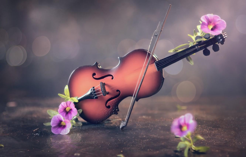 Фото обои цветы, фон, скрипка