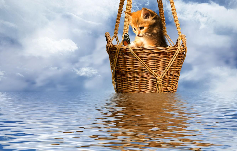 Фото обои котенок, бабочка, рябь на воде, корзинка, небо в барашках