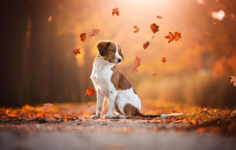 Пришла осенняя грустинка картинка с собаками
