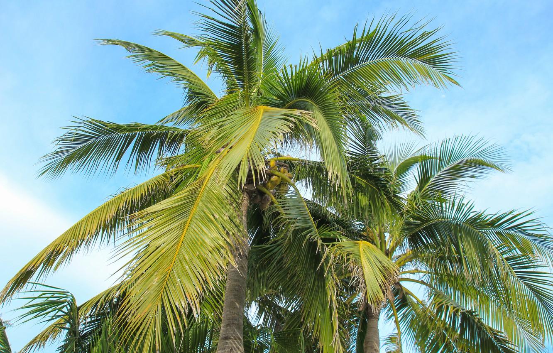 Фото обои пляж, лето, небо, пальмы, summer, beach, beautiful, paradise, palms, tropical