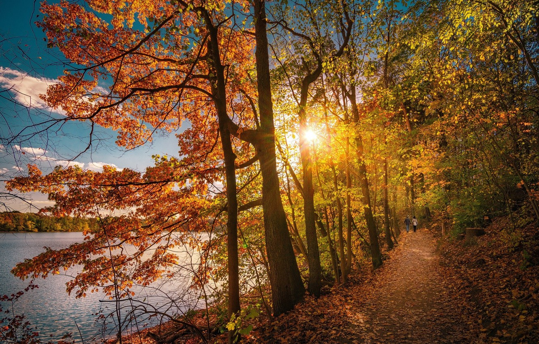 Фото обои дорога, осень, лес, люди, утро