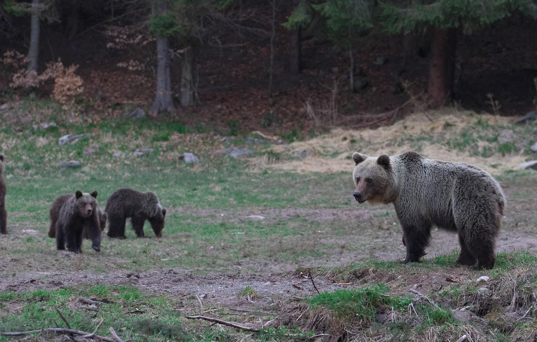 магазинах медведь медвежонок сараев фото шиповник