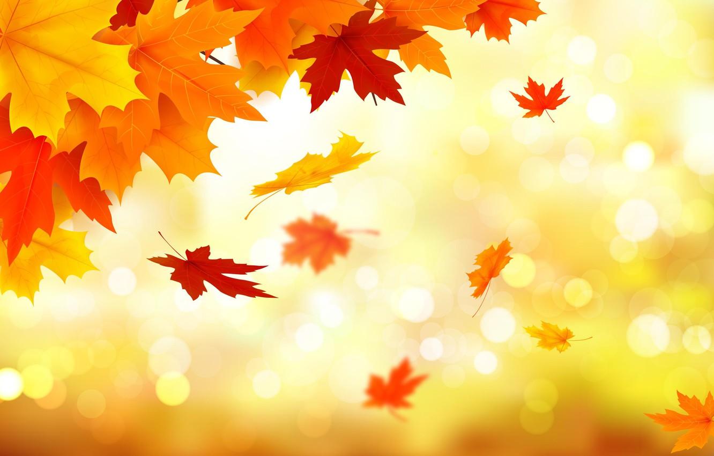 Фото обои осень, листья, фон, colorful, клен, background, autumn, leaves, maple