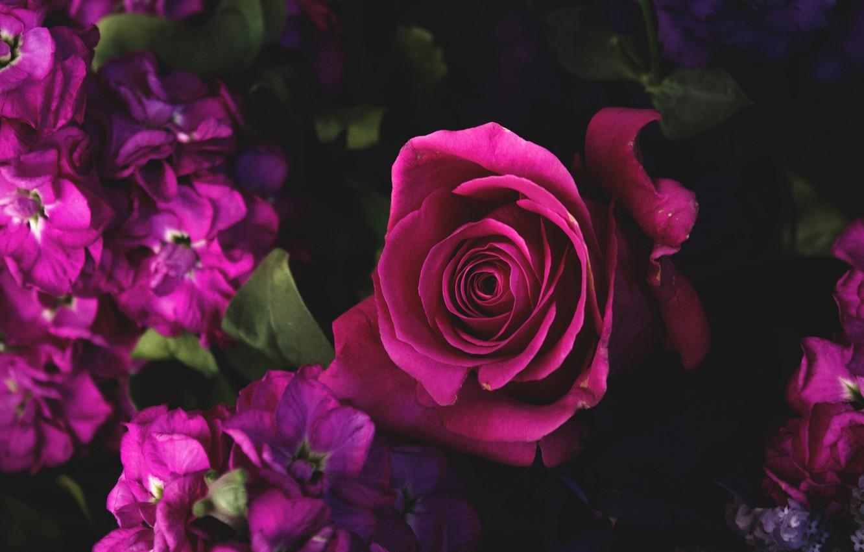 Фото обои цветы, роза, лепестки