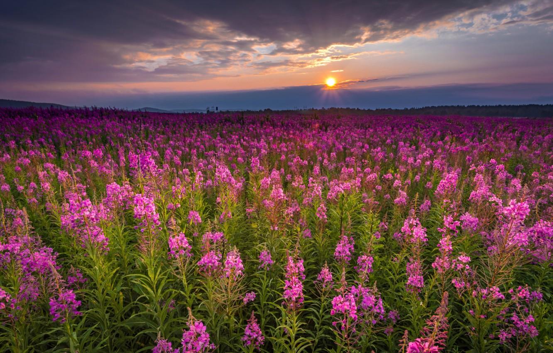 Картинки стихами про цветов