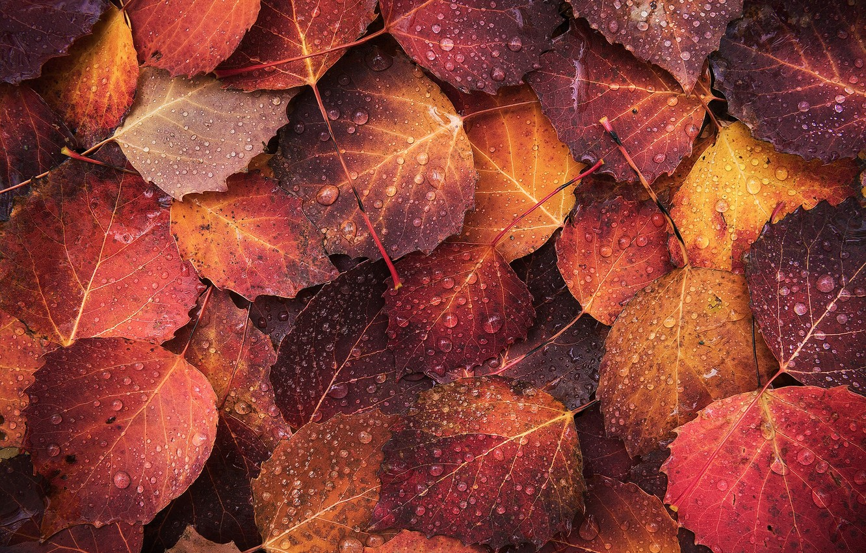 Фото обои осень, капли, макро, листва