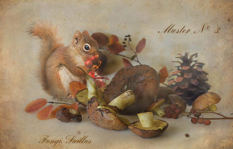 Фото обои ягоды, грибы, белка, натюрморт, шишка, рябина, маслята, ботанический альбом