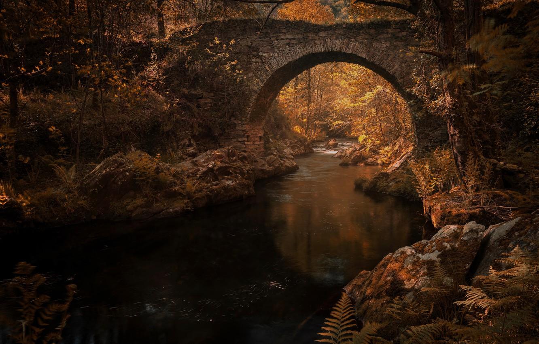 Фото обои осень, листья, вода, свет, деревья, ветки, мост, отражение, река, ручей, камни, заросли, растительность, листва, канал, …