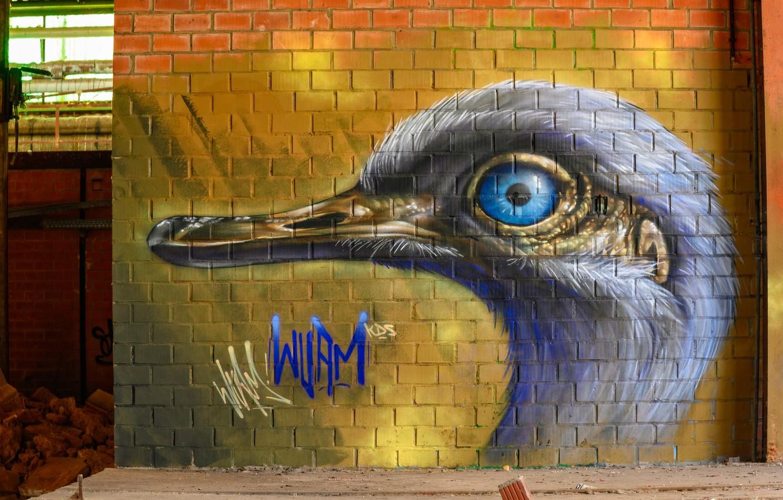 Фото обои птица, голова, стена граффити