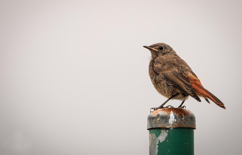 Фото обои птица, столбик, птаха